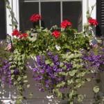 flowerbox(1)